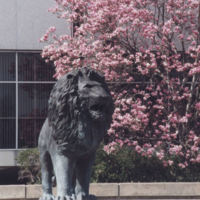 Lion Fountain With Blossoming Tree in Background